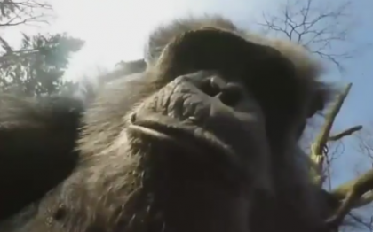 Chimp Downs Aircraft On Purpose, Inspects The Wreckage, Video